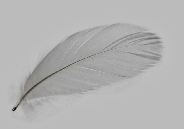 magnetic feathers mineheart
