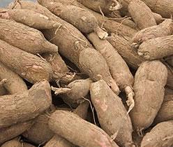 cassava flour , flour from cassava , cassava flour in nigeria , nigerian cassava flour