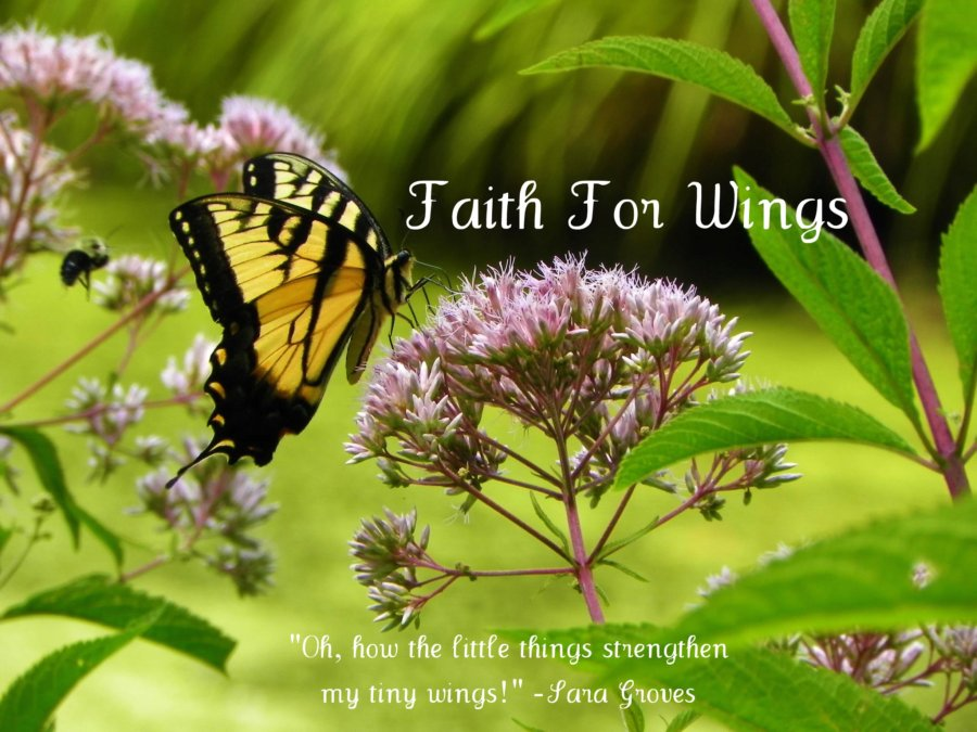 Faith for Wings