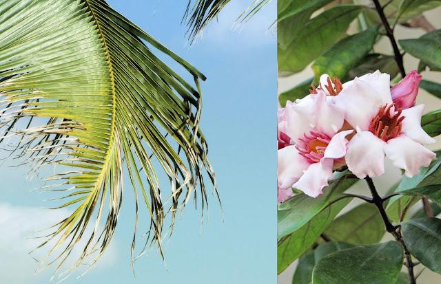 tropical island destination beach wedding