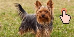 Cachorros tamaño pequeño: