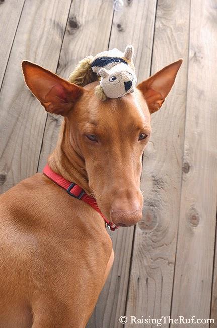 funny dog toy