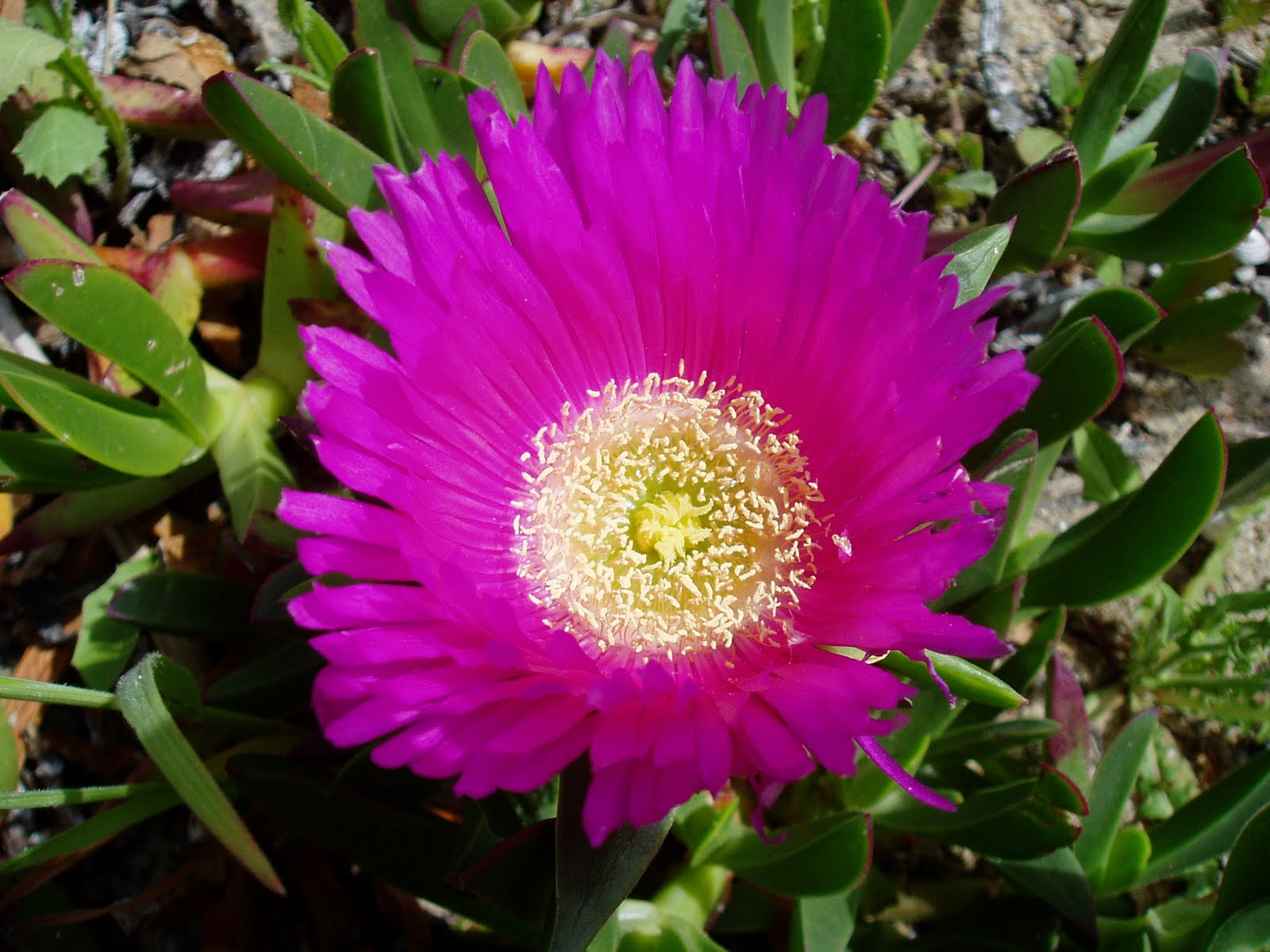 Plantas ex ticas plantas riomoros for Plantas exoticas para jardin