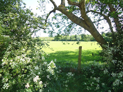 Hazeley Wood