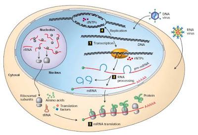 Pengertian Biologi Sel Molekuler