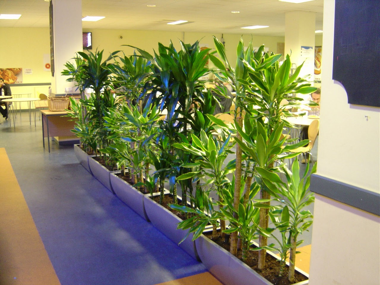 Fitorremediaci n del aire interior las plantas sobre el - Plantas del interior ...