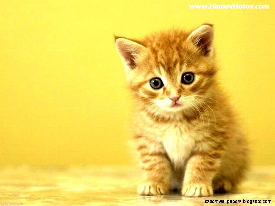 Cute Kitten HD Wallpapers