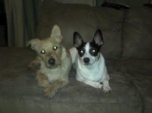 Ernesto and Emilio