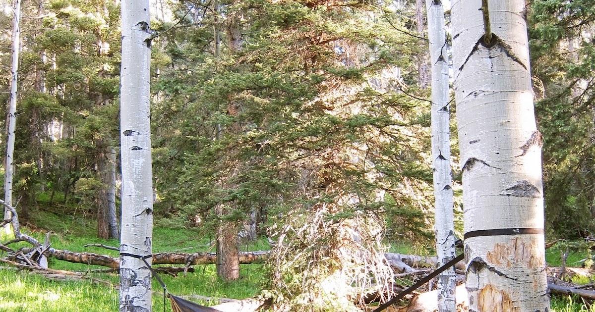 rambling hemlock  why i love hammocks  rh   ramblinghemlock blogspot