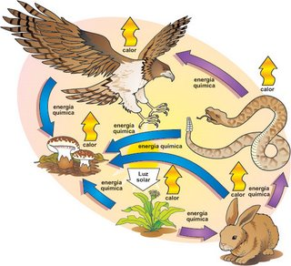 RTA/ Los organismos que se ven involucrados en el primer grafico son: