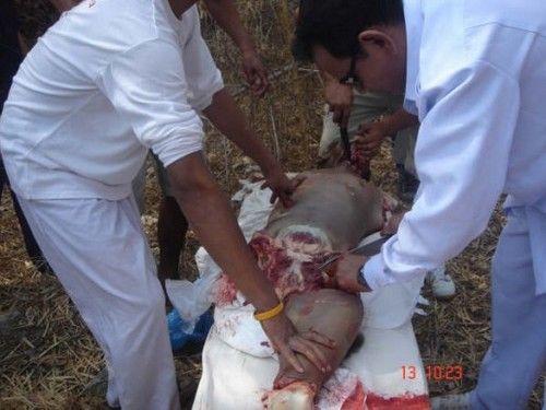 Mengerikan, Aliran Sesat Membunuh Dan Berpesta Memakan Daging Manusia