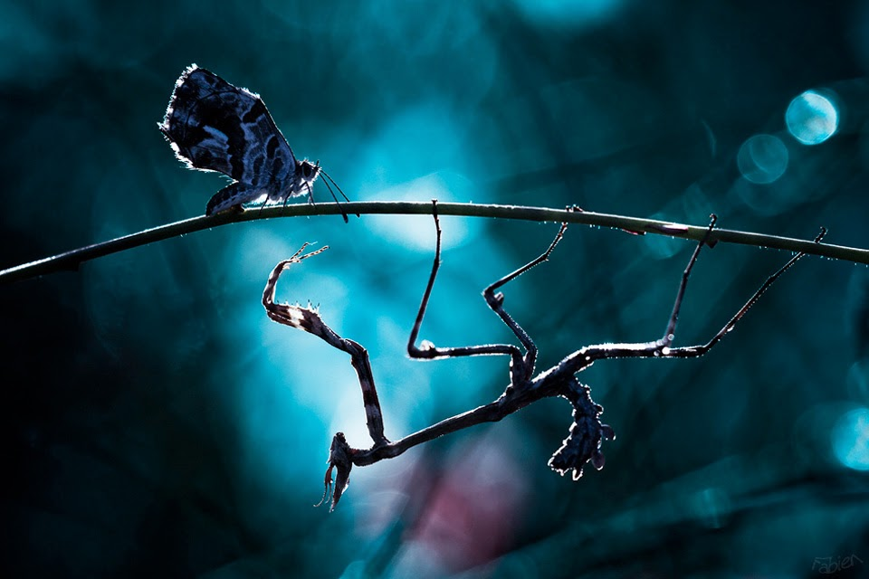 Most Amazing Macro Insect Photography