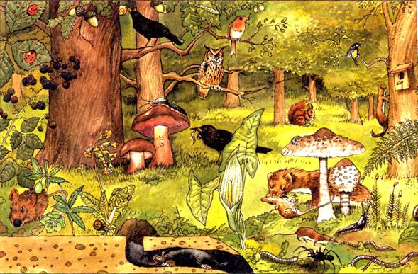importancia microorganismo ecosistema: