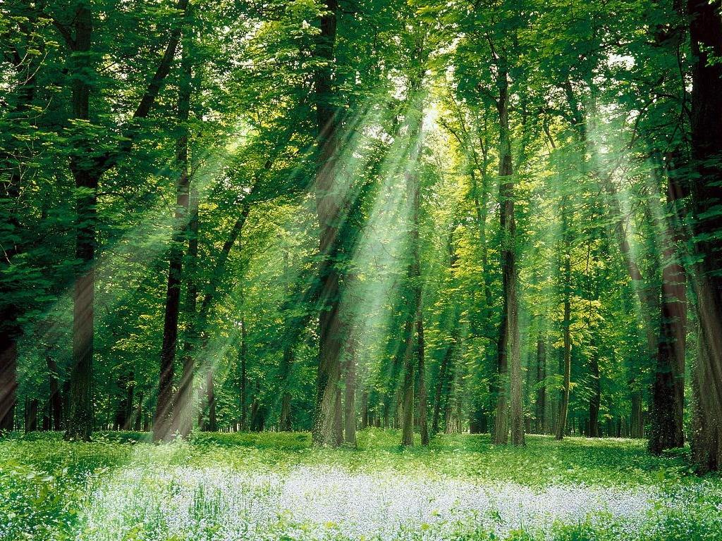 Bosque Vidus (Centro del bosque) Bosque_Iluminado-1024x768-241098