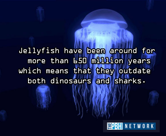 10 Amazing facts about ocean animals, amazing animals facts, ocean animal facts, jellyfish fact