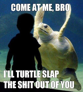 come at me bro, come at me bro i will turtle slap the shit out of you, funny turtle, funny turtles, funny turtle attack, turtle slap, i will turtle slap the shit out of you