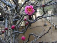 寒空に一輪、また一輪と美しい花が健気にも咲き誇っていた。