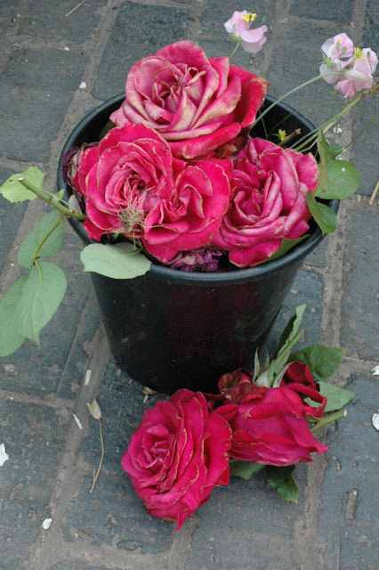 the faded heads of Alec's Red Rose in a black bucket