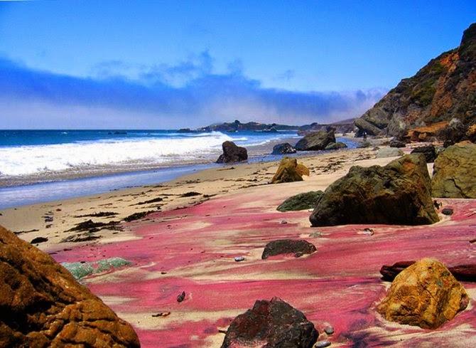 Pantai ungu Pfeiffer