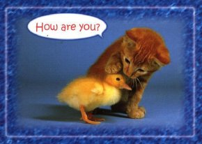 funny picture cat and duckling