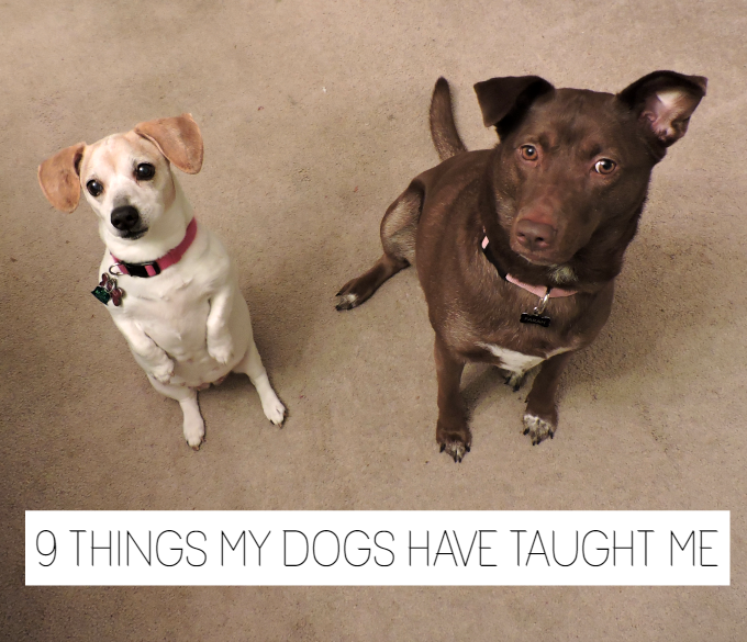 lessons from my dogs