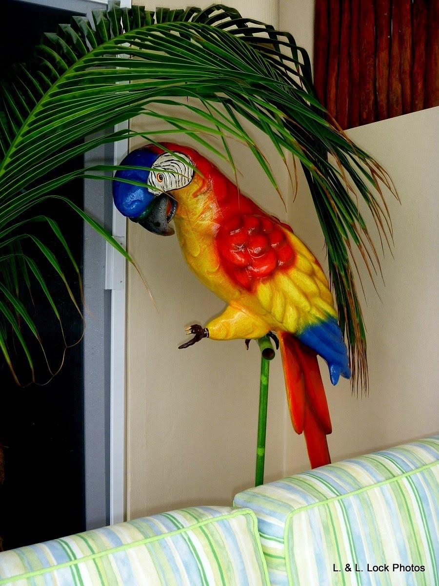 Guacamaya Bird