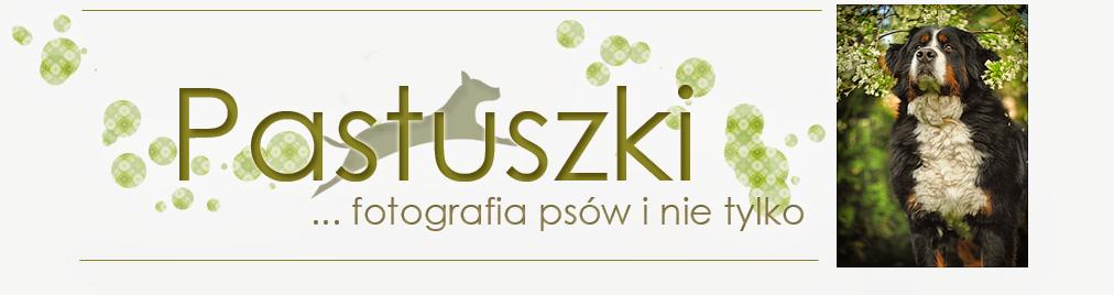 PASTUSZKI™ - Fotografia psów i nie tylko