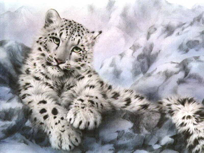 Baby Snow Leopards With Blue Eyes