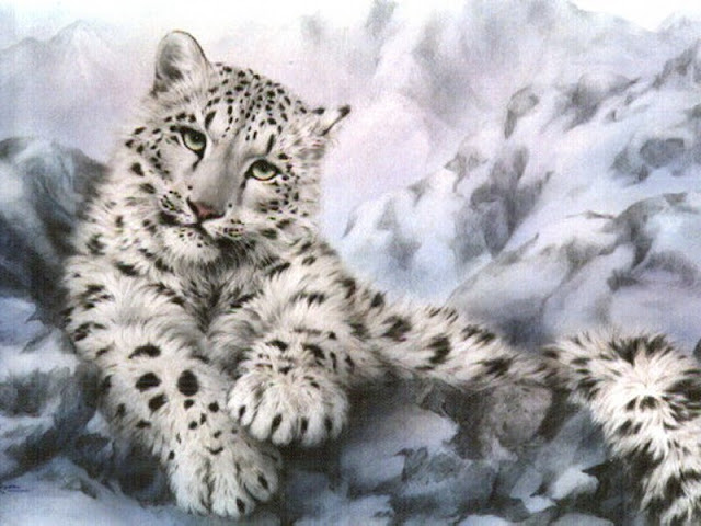 Snow Leopard Wallpaper