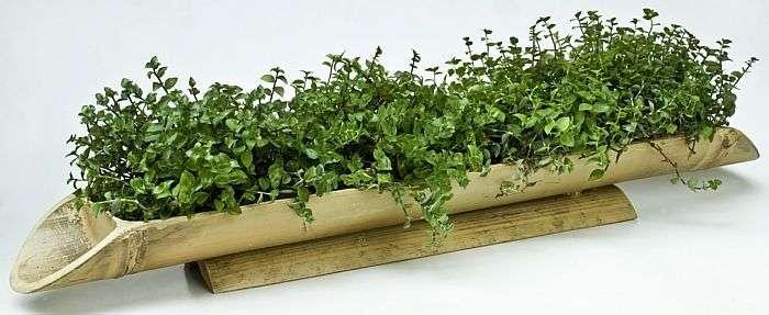 plantas de jardim que gostam de umidade : plantas de jardim que gostam de umidade:Com mãos de tinta e muito capricho, elas saem do improviso para algo