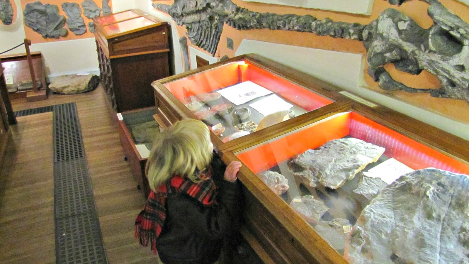 an introduction to the history of marine fossils What does the fossil record tell us about plate tectonics  but not necessarily for marine organisms  e, plate tectonics and the history of life in the oceans .