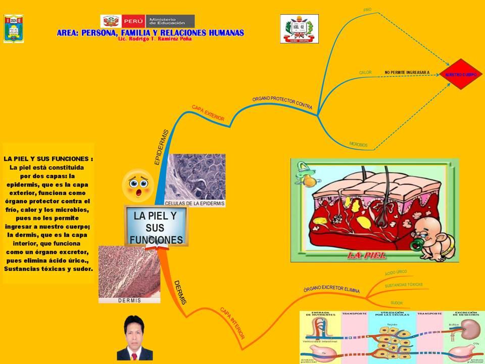 Rea persona familia y relaciones humanas mapa mental Areas de la cocina y sus funciones