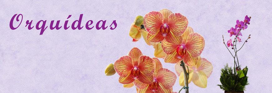 Manual Prático Como Cuidar de Orquídeas