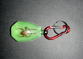 Araña. Arácnido Disecado, Fluorescente