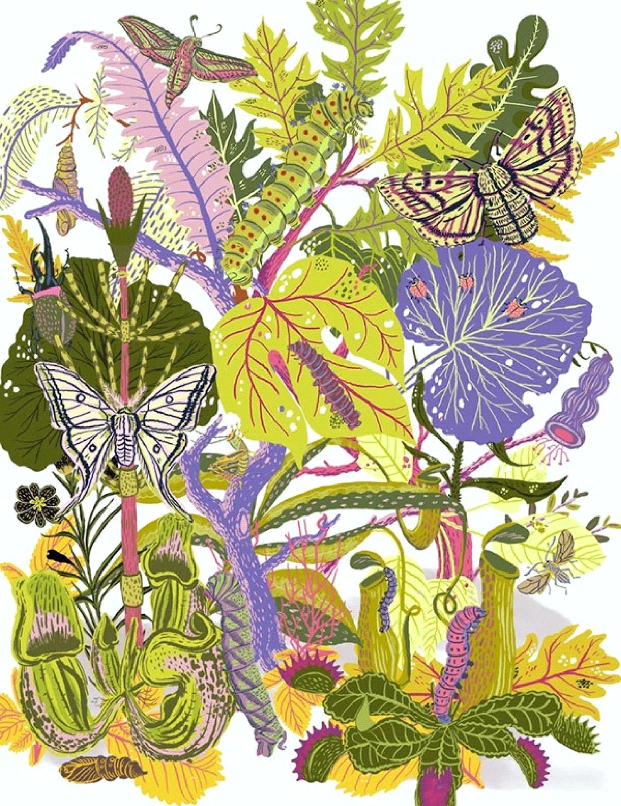 Ma Bicyclette: Inspiring Artists | Llew Mejia - moths and larvae illustration design
