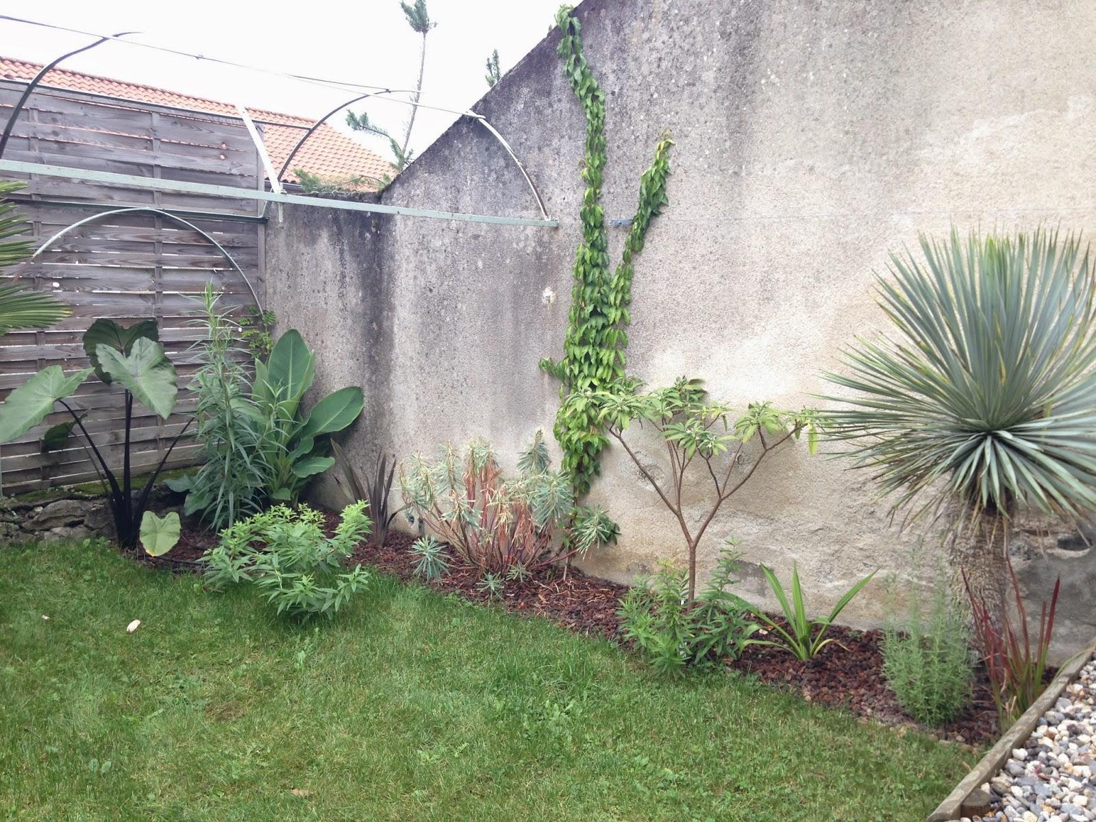 Plante plein sud que planter plein sud housse de couette lit king size plante plein sud notre - Que planter le long d un mur au soleil ...