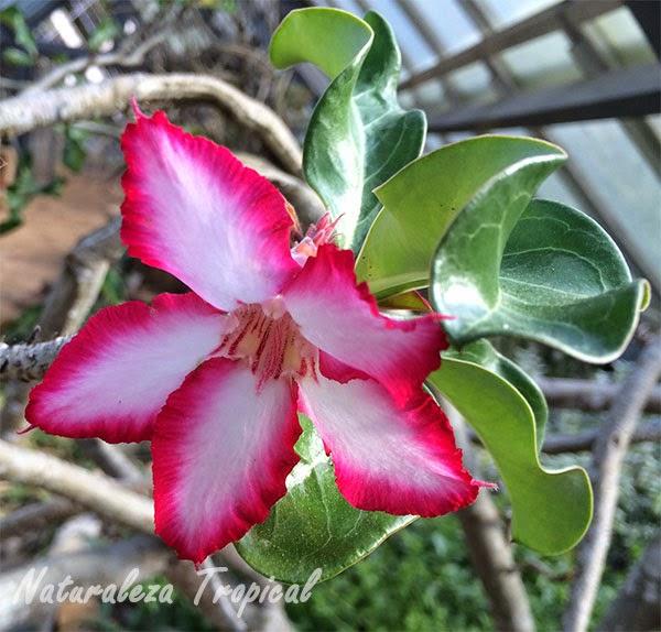 Fotos de flores hermosas y raras - Flores mas bonitas ...