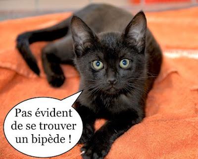 Chatonne noire trop mignonne.