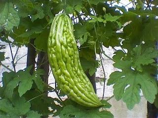 Khasiat dan Manfaat Sayur Pare