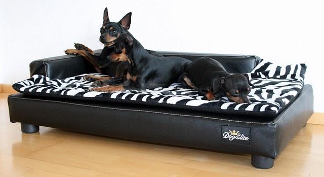 Hundezubehör für kleine und große Hunde - fashion and ...