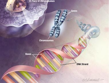 Genética...