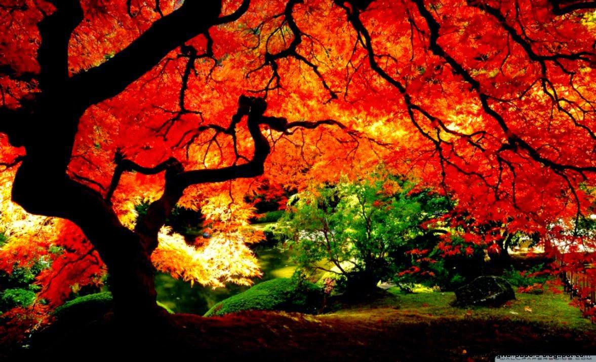 Beautiful Autumn HD desktop wallpaper  Mobile  Dual Monitor