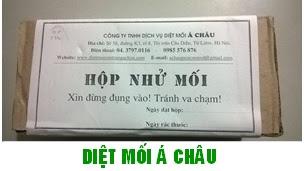 Dịch vụ diệt mối tận gốc tại Hà Nội
