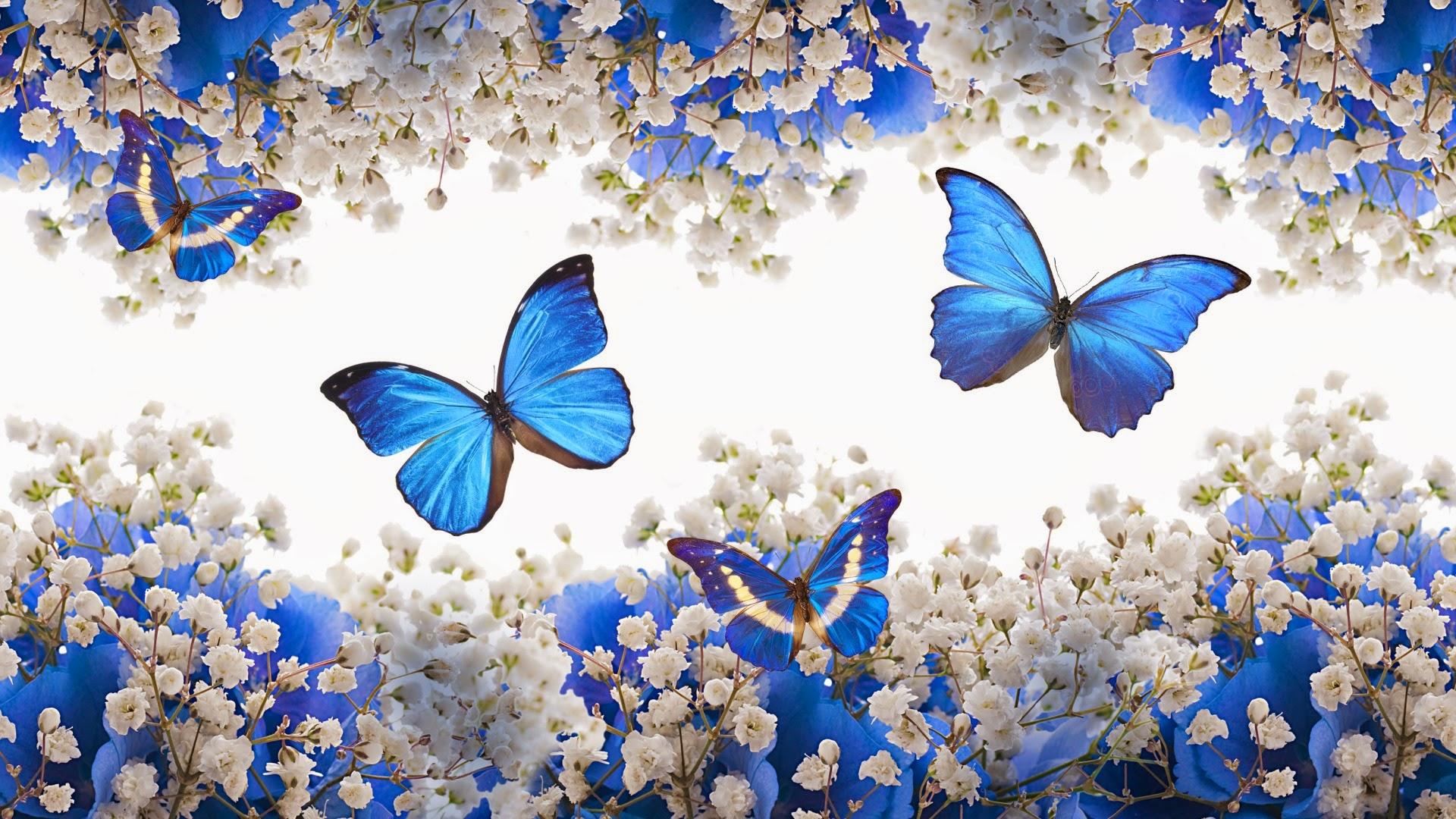 Mariposas azules wallpaper the image for Imagenes bonitas para fondo de pantalla