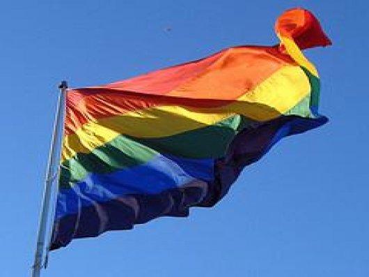 Coqs gays gays magnifiques