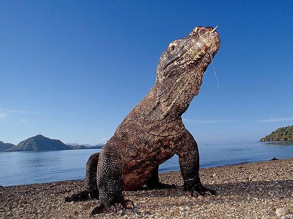 Pulau Komodo (Komodo island)