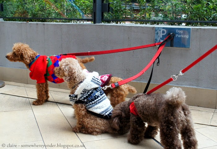 'Doggie Parking', Hong Kong 2013