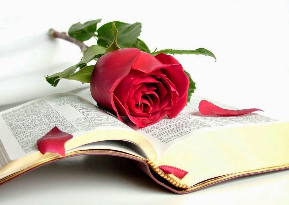 La mejor manera de cultivarse es através de los libros!