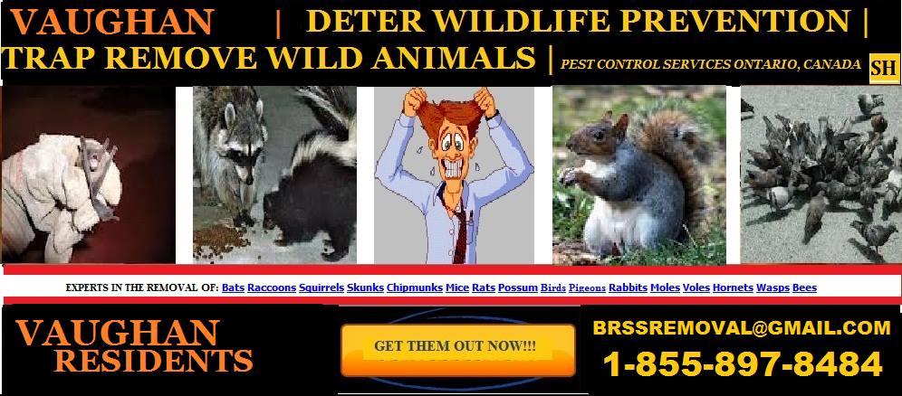 1 855 897 8484 Vaughan Wildlife