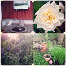 Älskar min trädgård